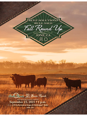 Sale Flyer cover