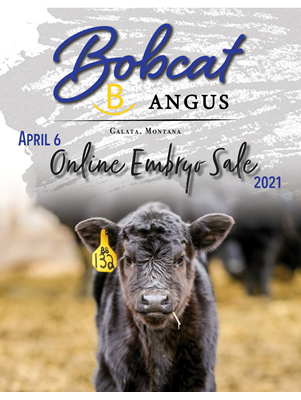 Bobcat Angus Production Sale